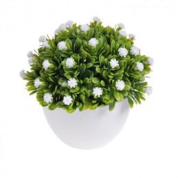 Kwiatuszki w dużej doniczce - 12 cm