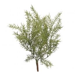 Asparagus x7 43 cm