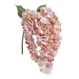 Hortensja wisząca x5  l.wiosenny 80 cm