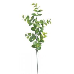 Eukaliptus x 1, 44 cm