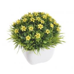 Kwiatki w doniczce 12 cm