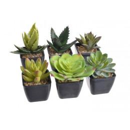 Zestaw mini kaktus w doniczce 9 cm MIX 12 sztuk/kpl