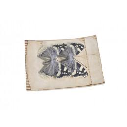 Motyl na klipie 6cm, 2szt/paczka CR / B