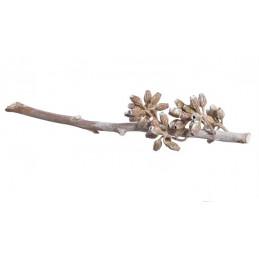 Eucalyptus maculata branch stonewashed 20-30 cm - suszona roślina