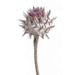 Cynara bud stonewashed 20-30 cm - susz roślinny