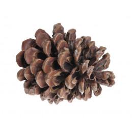 Szyszka Pinea Large 50szt..10-14cm - worek/50sztuk