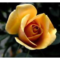 Kwiaty wyrobowe, główki róż, hortensji,storczyka, chryzantem itp.