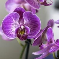 Sztuczne kwiaty oraz bukiety spełniające najwyższy standard wykonania oraz odwzorowania.