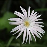 pojedyncze kwiaty,kwiaty solo,