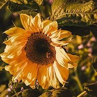 kwiaty jesienne,jesień, kompozycje jesienne,dodatki jesienne,