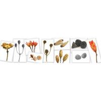 Susz kwiatowy, suszone rośliny sklep online